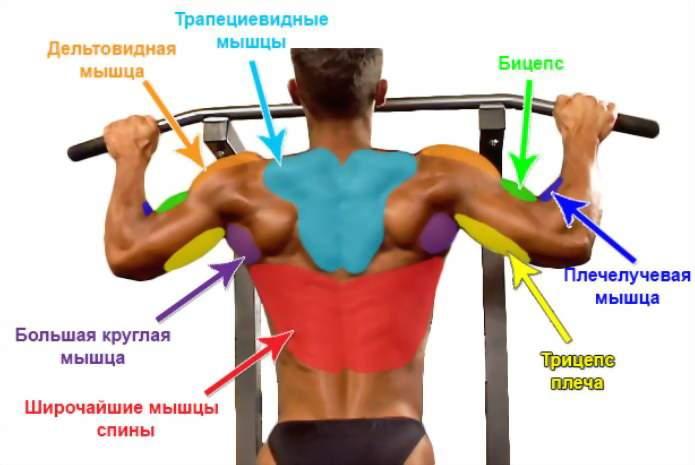 какие мышцы тренируются при подтягивании